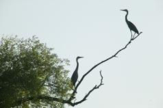 bird-watching-tourism