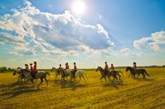 horse-tourism