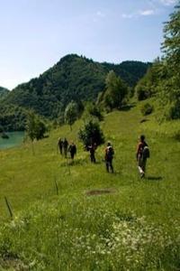 pedastriants-tourism